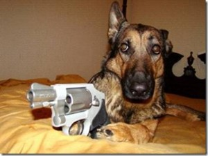 trigger-dog